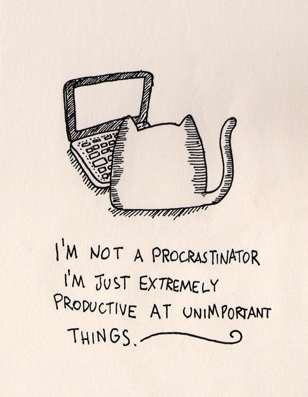 funny-procrastinator-cat
